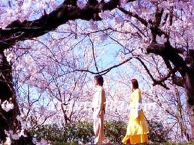 东京爱情故事里的樱花情 东京爱情故事吧