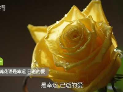 黄玫瑰代表什幺意思 黄颜色代表什幺意思