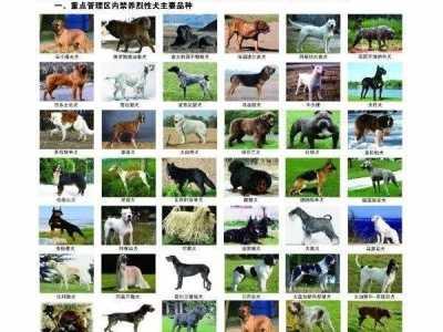 这48种烈性犬济宁市区内不让养了 沙克犬